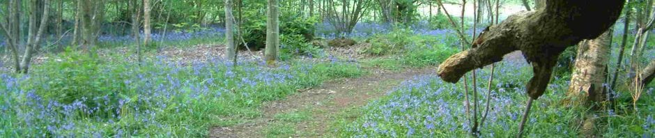 Bluebells path, Sandgate Park