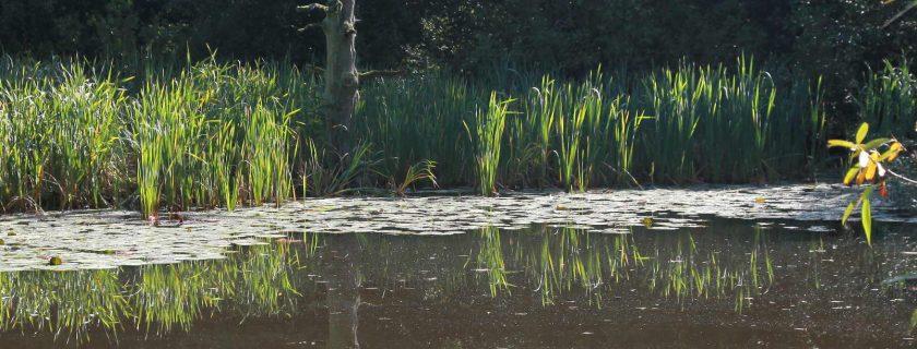 Pond, Sandgate Park