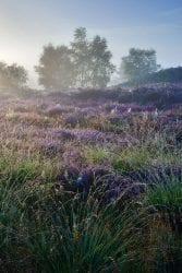 Heathland
