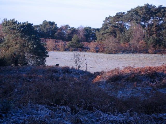 Frosty green on Sullington Warren