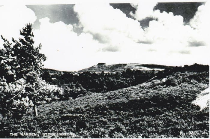 View from Sullington Warren towards Chanctonbury Ring circa 1950