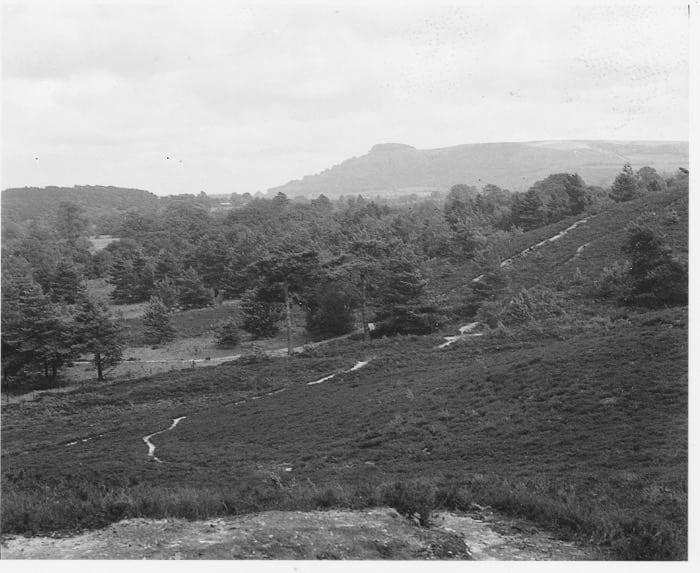 View to Chanctonbury Ring from stone seat 1958