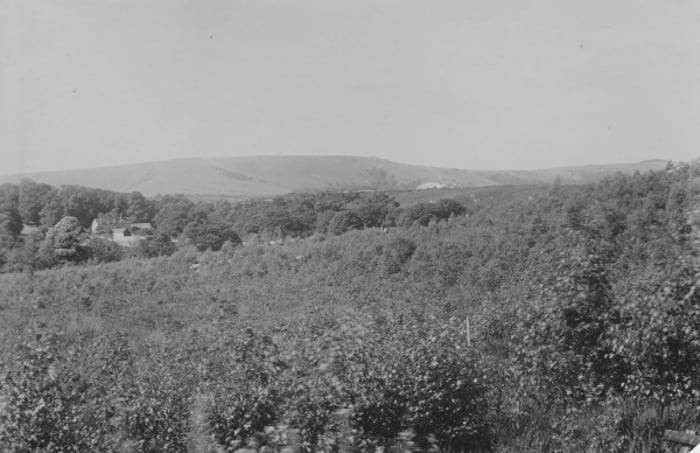 View towards Sullington Warren, in the middle distance, from Heath Common. August 1930