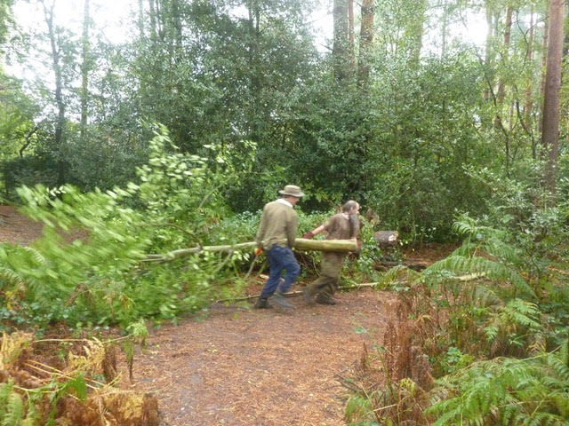 Shifting the felled trees - two man job